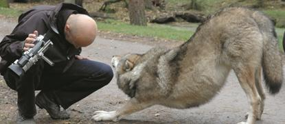 leve blandt ulver